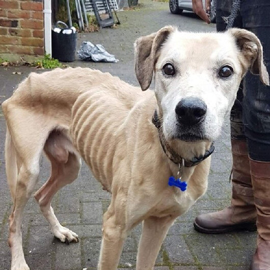 Skin and bones dog abandoned at animal shelter touches the heart of humanity