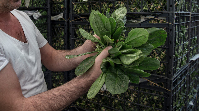 İstanbul Bayrampaşa'daki toptancı: Bugün bir kilo bile ıspanak satılmadı