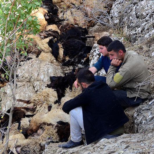 Bitlis'te uçurumdan düşen 315 koyun telef oldu: Mağdur olan aileler yetkililerden yardım bekliyor