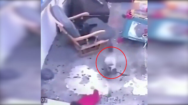 Kahraman kedi bebeğin merdivenlerden düşmesini böyle engelledi
