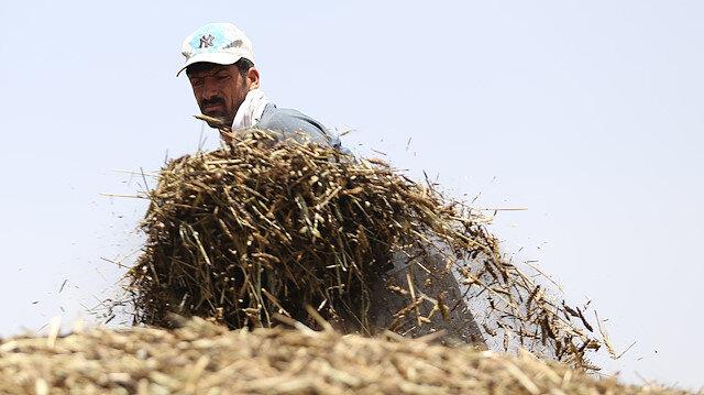 Tarım Bakanı açıkladı: Çiftçilere 284 milyon liralık destek