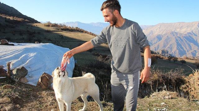 Kendisini ayı saldırısından kurtaran köpeklerine yemek ziyafeti çekti