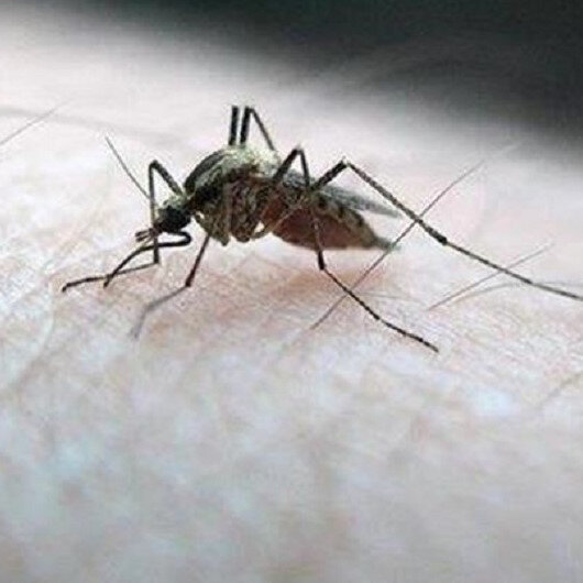 الحديدة اليمنية.. 60 وفاة بحمى الضنك والملاريا خلال شهر