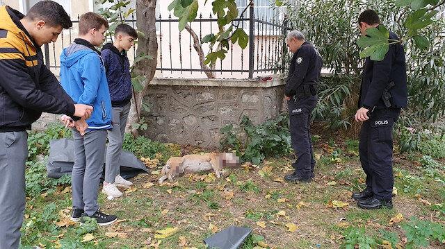 Okul bahçesinde, boğazı kesilmiş köpek ölüsü bulundu: Polis harekete geçti