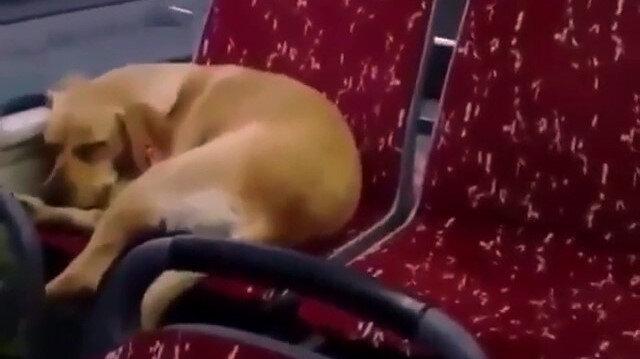 İstanbul'da otobüs şoförü soğukta üşüyen köpeği içeri aldı