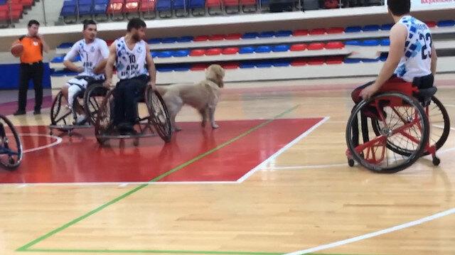 Karabük'te sahaya giren köpek nedeniyle maç durdu