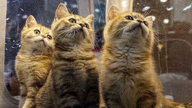 Winter Cat Show in Russia