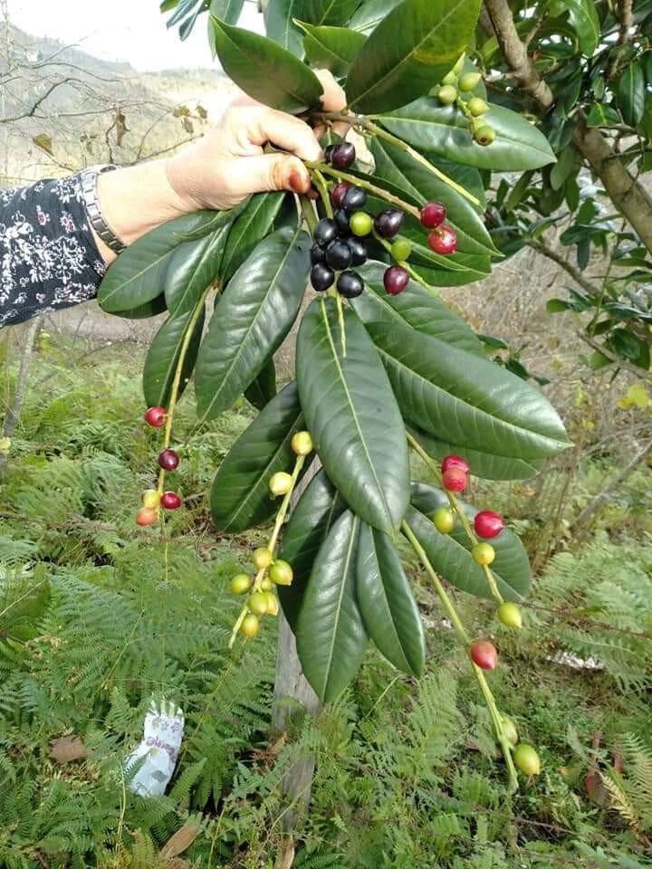 Mayıs ve haziran ayında hasat edilen meyveler yemiş verdi.
