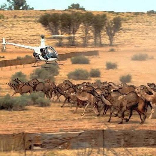 İHH Avustralya'da katledilecek 10 bin deve için harekete geçti: Kesip etlerini ihtiyaç sahiplerine dağıtabiliriz