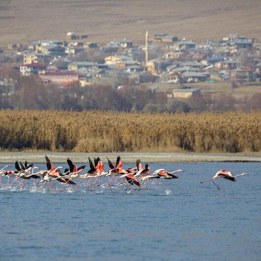 """""""وان"""" التركية تحتضن عشرات أنواع الطيور المهاجرة"""