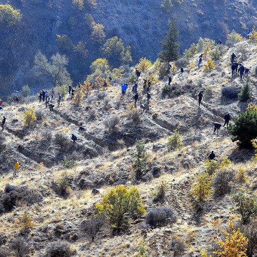 Turkey aims to plant 82 million saplings until November