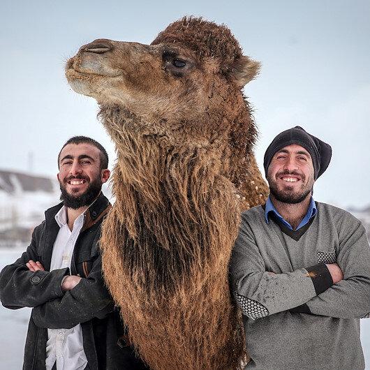 """وان التركية.. """"سفن الصحراء"""" تستعدّ لسباق قمم الثلوج"""