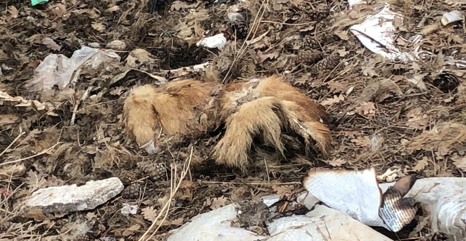 Ölü köpekler belediye ekipleri tarafından gömüldü.