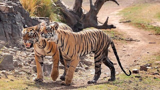 دراسة: التغير المناخي يؤدي لانقراض ثلث الحيوانات والنباتات في 2070