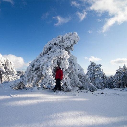 """الثلوج تحول جبل """"مراد"""" التركية إلى لوحة طبيعية"""
