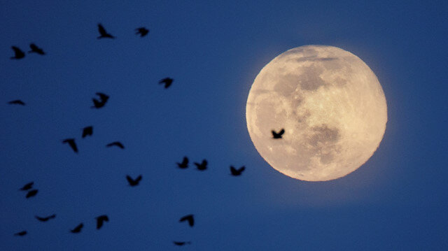 The Pink Supermoon is seen behind a flock of birds during moonrise, in Arlington, Virginia, US, April 7, 2020