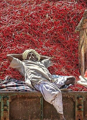 Kırmızı (Chilli) biberlerin üzerinde dinlenen bir Hindistanlı.
