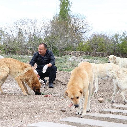 تركي يتكفّل بإطعام حيوانات الشوارع منذ 10 سنوات