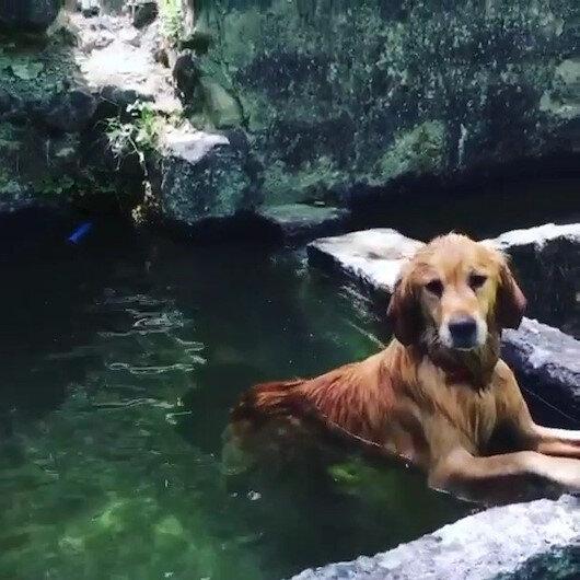 Sıcak havadan bunalan köpek soluğu havuzda aldı