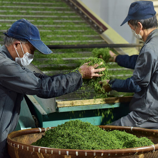 World marks first-ever International Tea Day