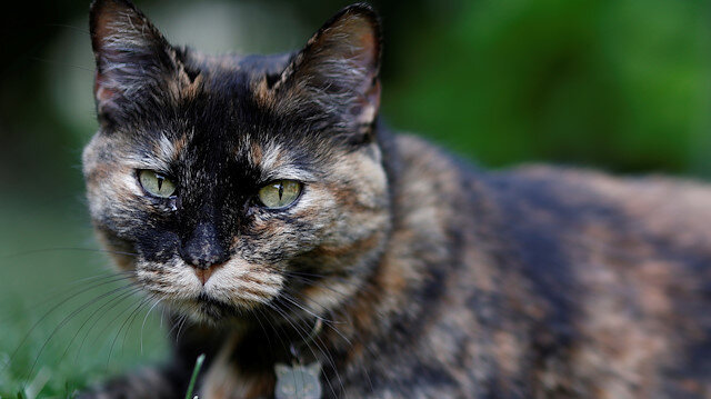 Papille, a 9 year-old cat who recovered after being tested positive for the virus is seen in his owner's garden amid the coronavirus disease (COVID-19) outbreak, in Athis-Mons, near Paris, France, May 27, 2020. Picture taken May 27, 2020. REUTERS/Christian Hartmann