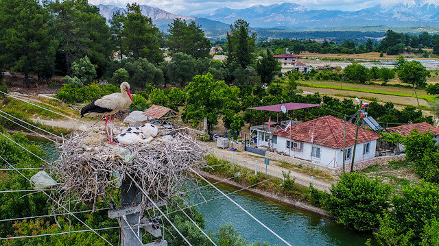 """The residents of Karagöz village, known as """"Stork Haven"""", revel in the joys of birdwatching in early March when storks arrive to the town and perch on electric power poles for the most part"""