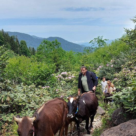 تركيا.. قرويون يبدأون رحلة شاقة للمرتفعات بقدوم الربيع