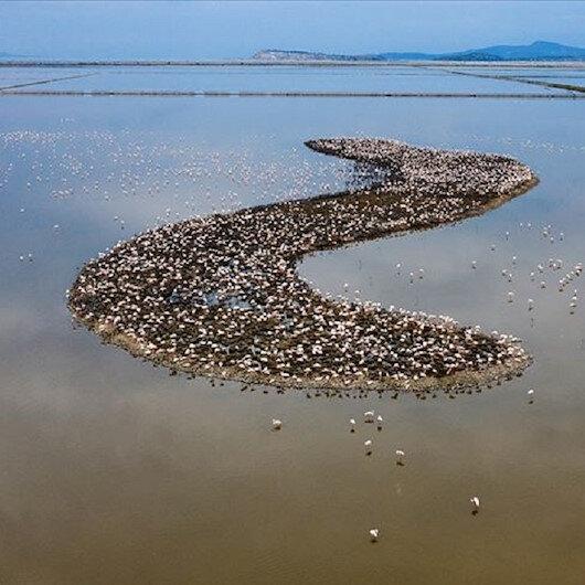في جزيرة بإزمير التركية.. 18 ألف فرخ فلامينغو يبصر النور
