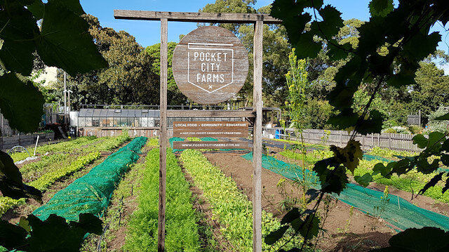 Crops grow on a market garden of Pocket City Farms, during an outbreak of the coronavirus disease (COVID-19), in inner Sydney, Australia April 29, 2020.