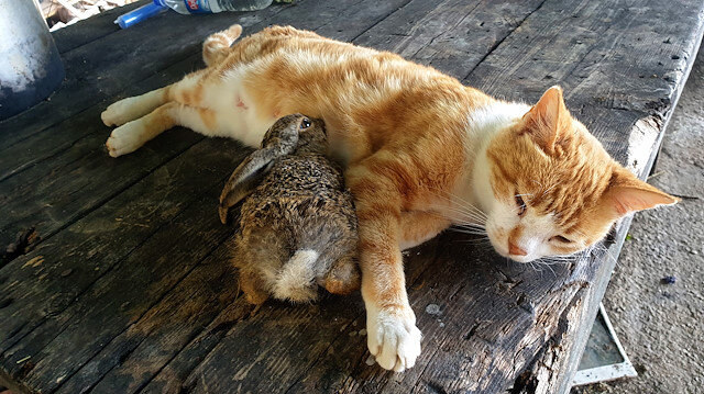 Meet adorable pets of the week: Mother cat adopts, nurses abandoned baby bunny