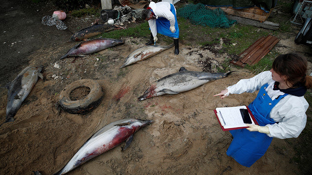 File photo: Experts at the Observatoire Pelagis examine the bodies of dolphins, which were found dead on a beach, during scientific autopsies at municipal technical services in Barbatre on the Noirmoutier Island, France, February 11, 2020. Picture taken February 11, 2020