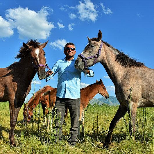 """حازت ألقابًا وبطولات.. خيول عربية في """"موش"""" التركية"""