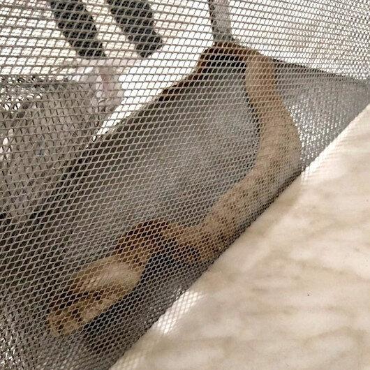 Adıyaman'da bulunan çiftliğin kümesinde yılan yakalandı