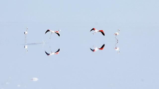 بحيرة الملح التركية.. جنة طيور الفلامينغو