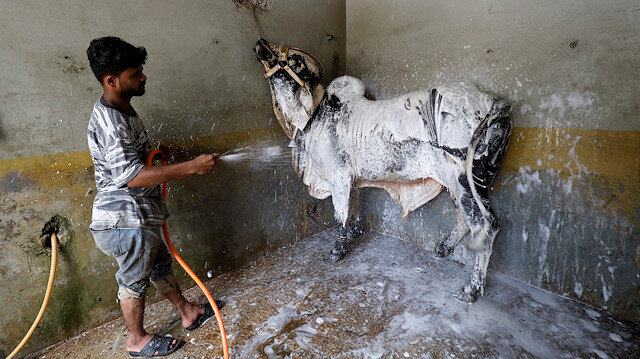 A worker applies foam to clean the bull during a spray wash at an automobile service station, ahead of the Muslim festival of sacrifice Eid al-Adha, as the coronavirus disease (COVID-19) outbreak continues, in Karachi, Pakistan July 30, 2020.