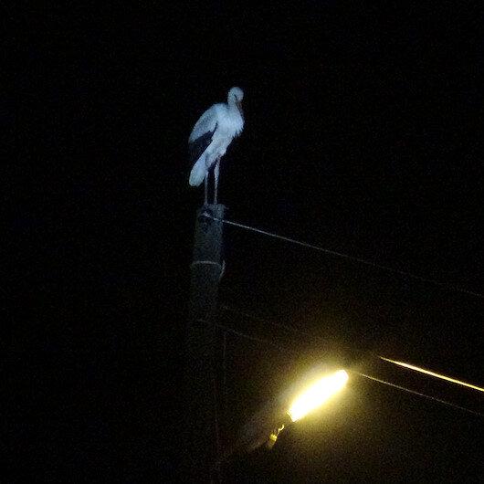 Balıkesir'de 'leylekler akıma kapılmasın' diye 3 mahallenin elektriği kesildi