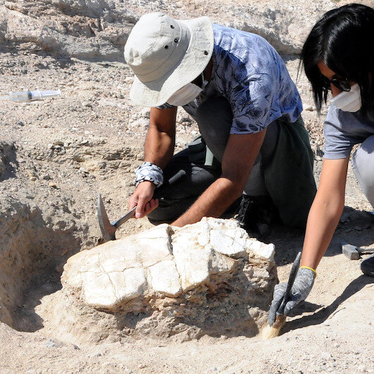 Kayseri'deki ilk kez kaplumbağa fosili bulundu: 7,5 milyon yıllık