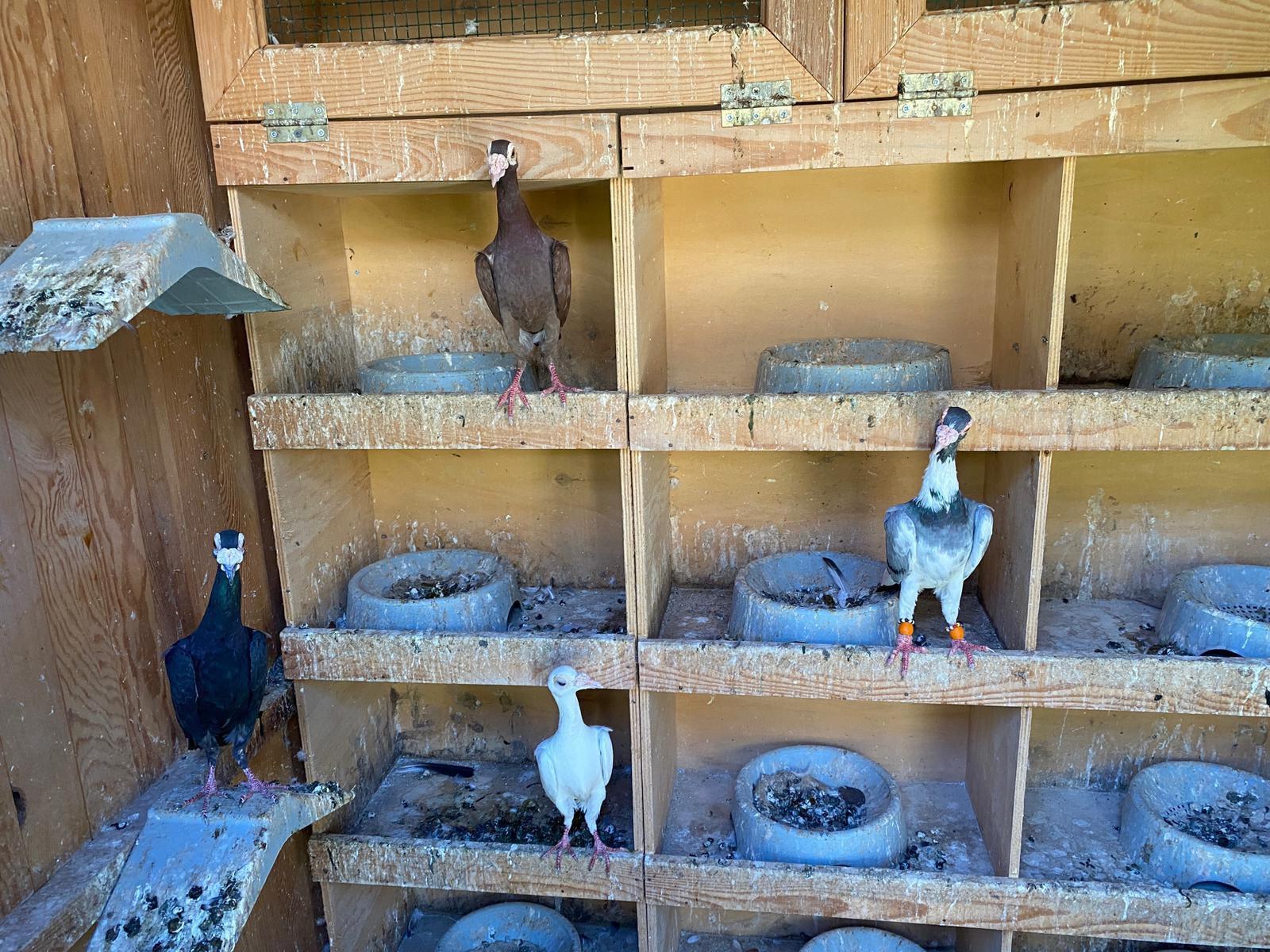 Aramada puma, iguana, kedi ve kuşların da bulunduğu çok sayıda hayvan ele geçirildi.