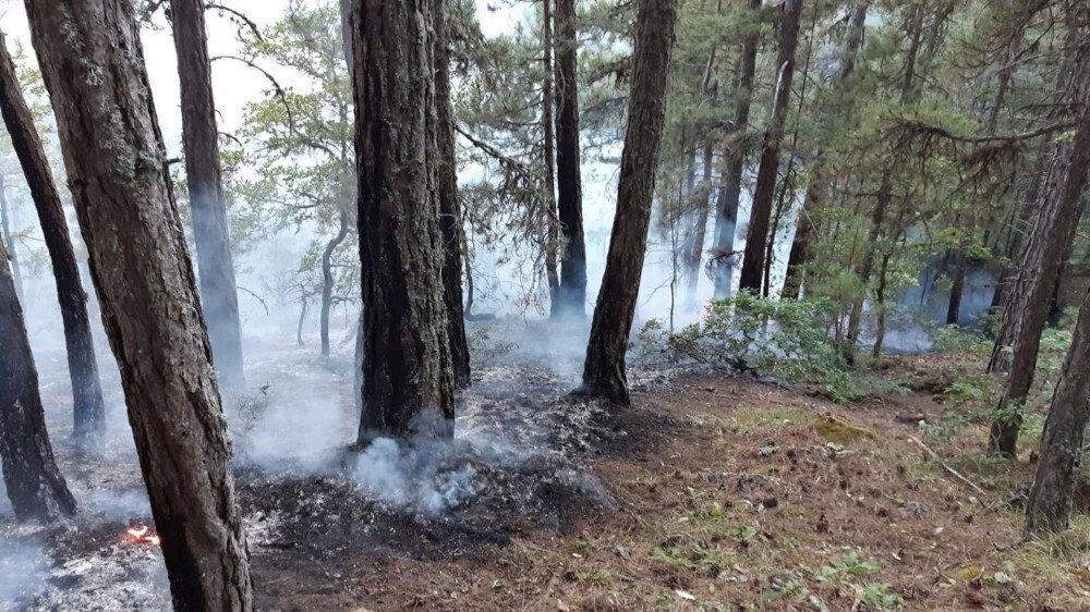 Çıkan yangın ekiplerin yoğun çalışması sonrasında büyümeden söndürüldü.