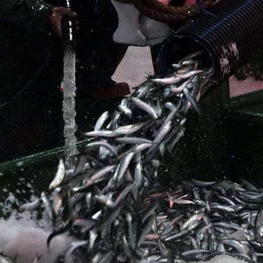 """Balıkçılar """"Vira bismillah"""" dedi: İlk gecede 25 ton sardalya yakaladılar"""