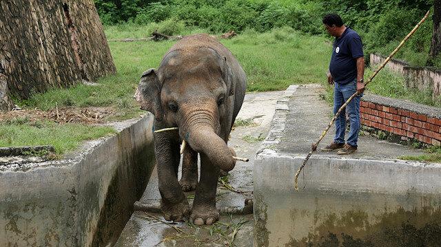 Amir Khalil, head of project development at FOUR PAWS International, sedates Kaavan, an elephant at the Marghazar Zoo in Islamabad, Pakistan, September 4, 2020.