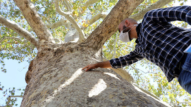 الأشجار المعمرة في تركيا.. جمال تتوارثه الأجيال