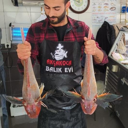 Balıkçıların ağına 5'er kiloluk kırlangıç balıkları takıldı: Tanesi 500 liradan satılıyor