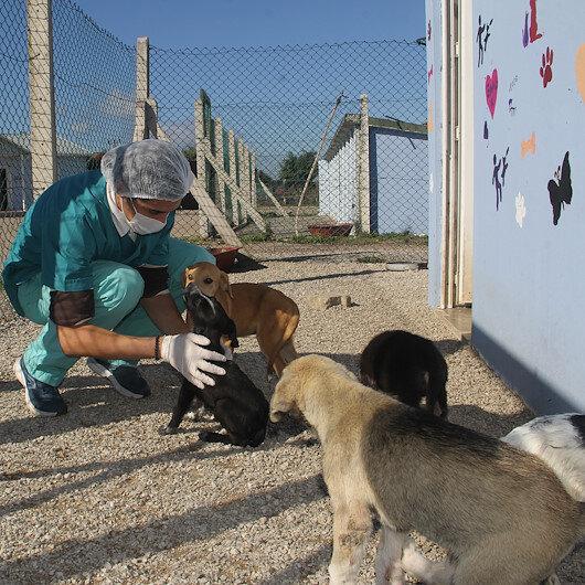"""طبيب جزائري يتطوع لرعاية حيوانات الشوارع في """"سينوب"""" التركية"""