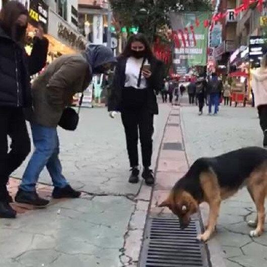 Her gün saatlerce aynı yere bakıyor: Mazgalın içini izleyen köpek merak konusu oldu