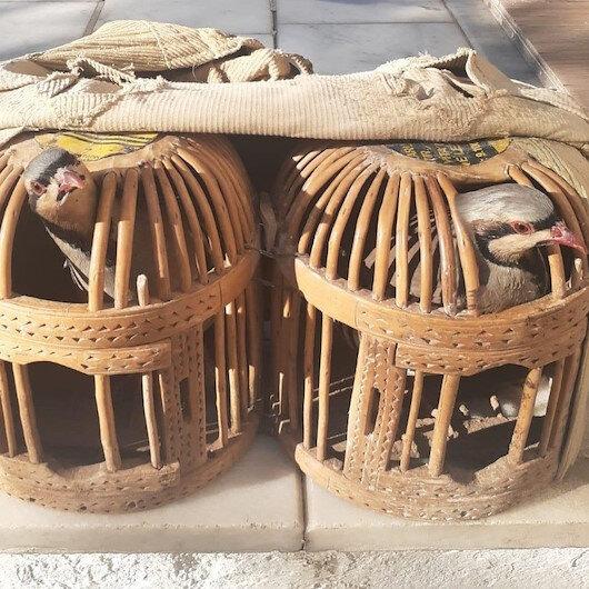 Usulsüz keklik avının cezası 3 bin lira