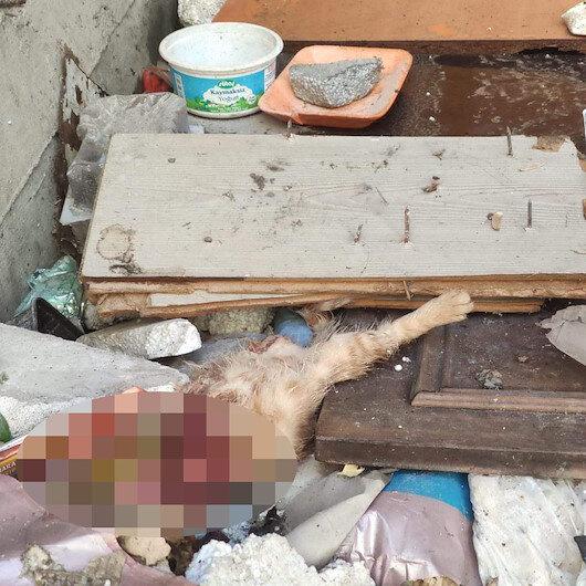 Eyüpsultan'da vahşet: 4'ü yavru 7 kedi paramparça bulundu