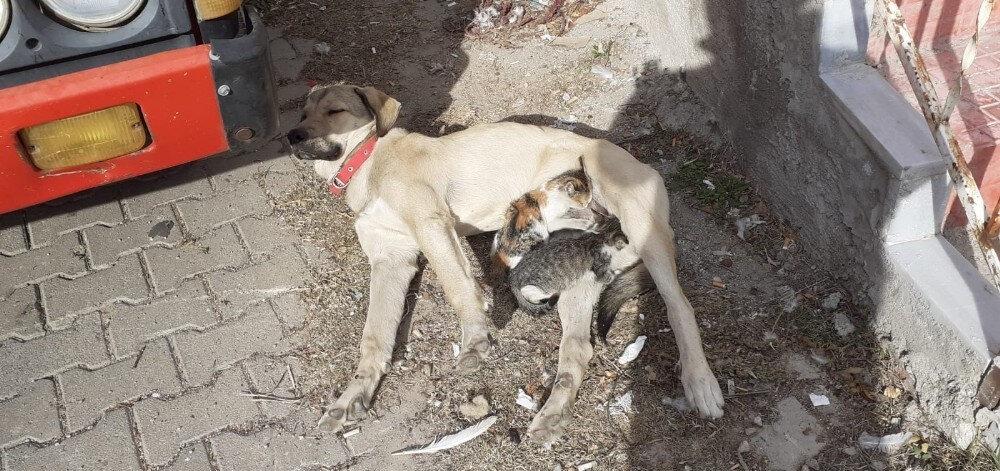 Köpek ve kedi yavrularını görenlerin içini ısıtan görüntü.
