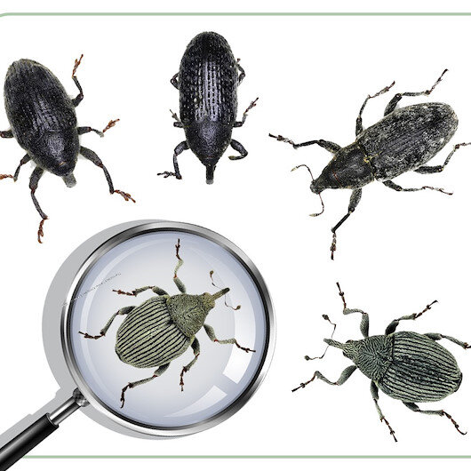 Turkish scientists help discover 5 new insect species