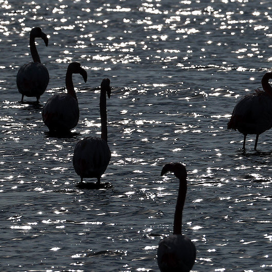 At least 750 pelicans perish at bird park in Senegal